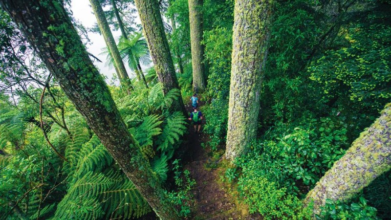 09_tall-trees-runners-content.jpg